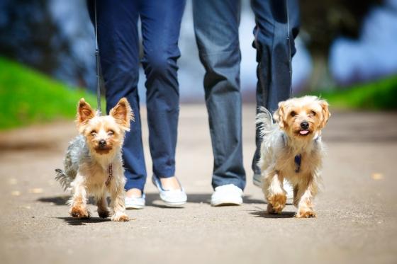 Doggy Photoshoot - Arundel Park / Hiorne Tower